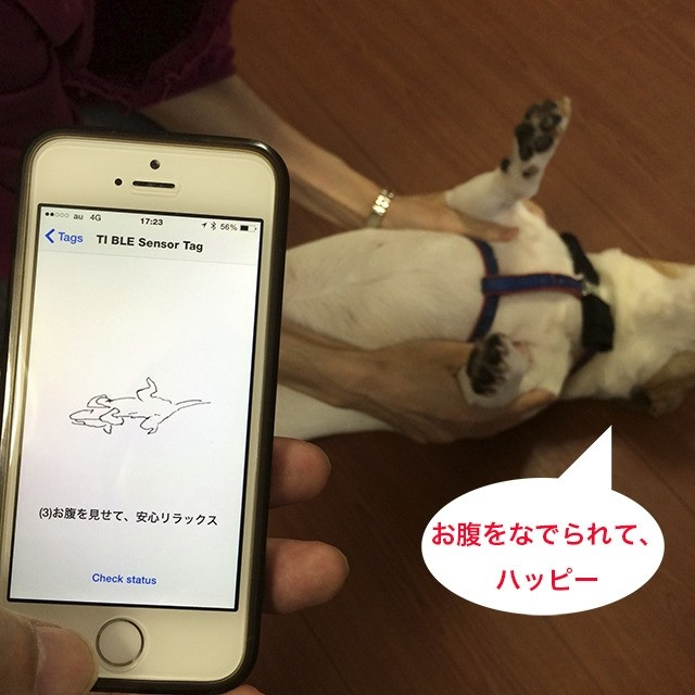 shiraseru-amu-pet-wearable-device-monitoring-app-1